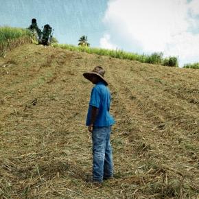 Plantations Saint James, Martinique - 2014
